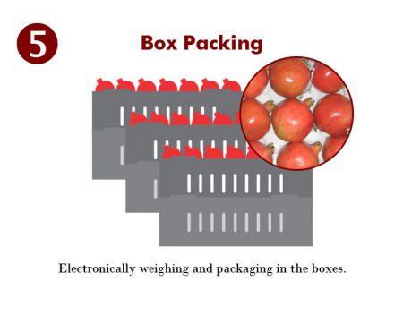 5p-box